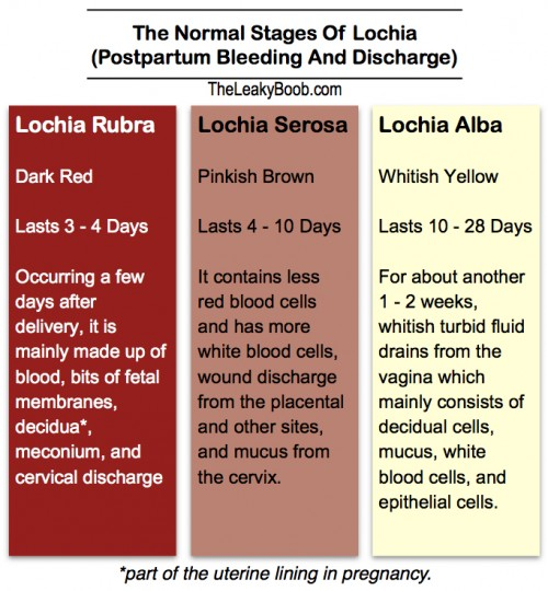 Normal Postpartum Bleeding And Discharge And The Return Of Your