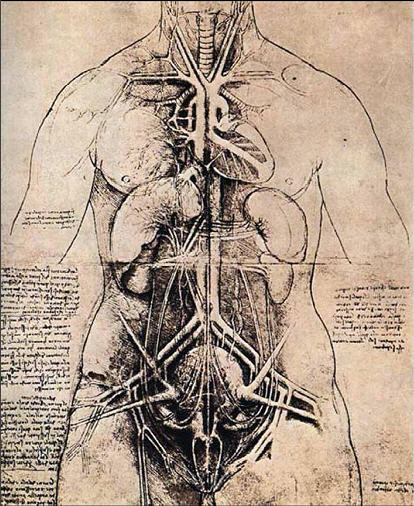 Leonardo Da Vinci S Drawing Of The Heart
