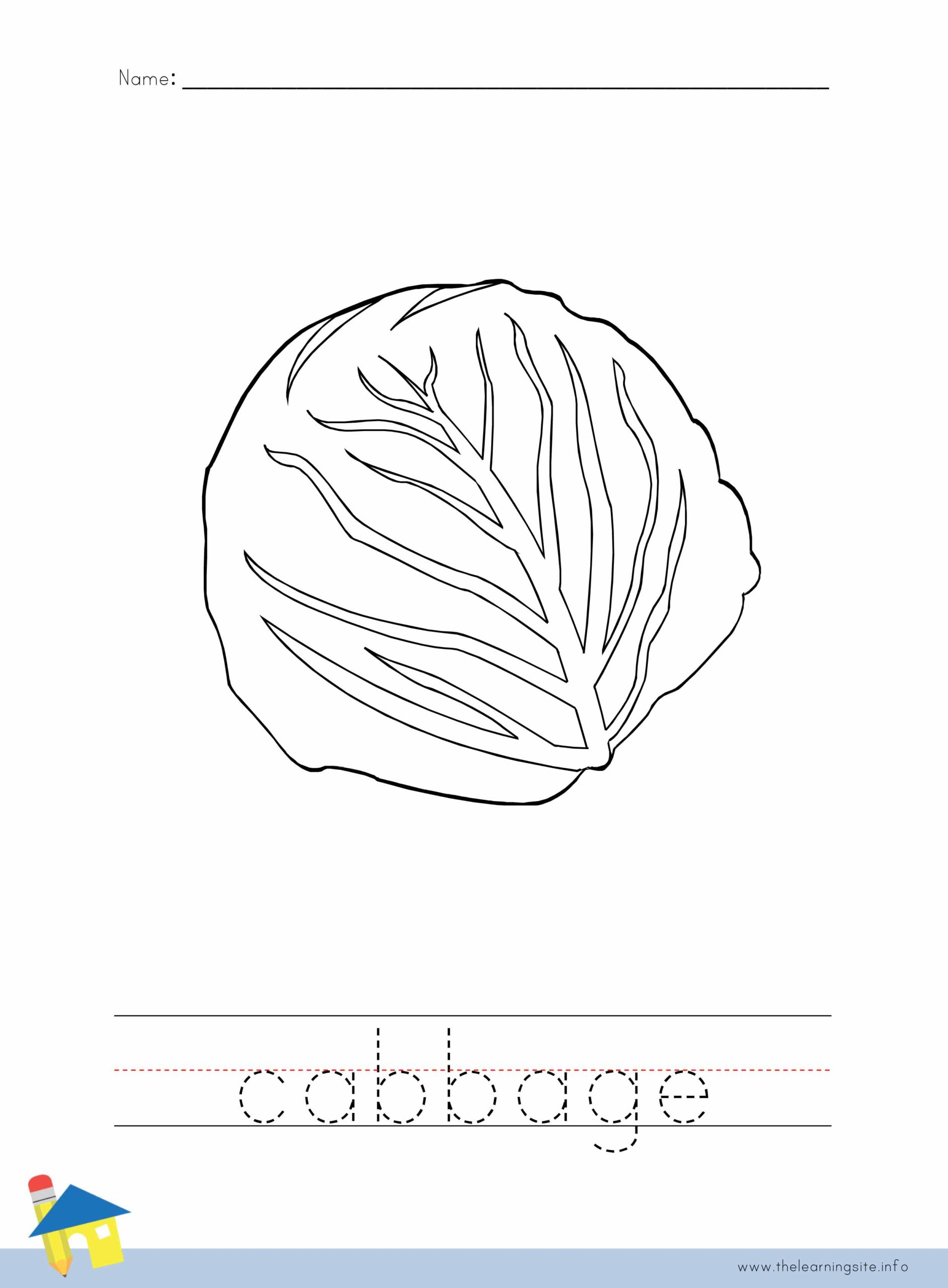 Cabbage Coloring Worksheet The Learning Site