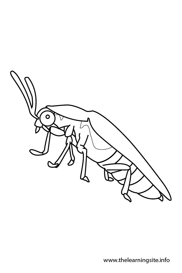 Firefly Insect Diagram Of Parts