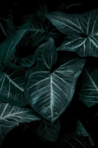 wallpaper, green, leaf