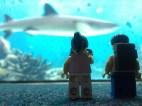 Shark enclosure