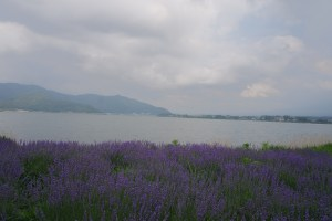 Lavender, and lake