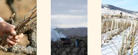 Preparing the ground for Beaujolais Nouveau