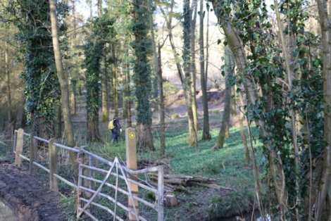 Woodland in the Weald of Kent, full of wild garlic