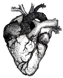 heart drawing human anatomical hearts anatomy clipart together google valentine instead started did