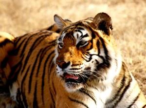 Tiger Reserves