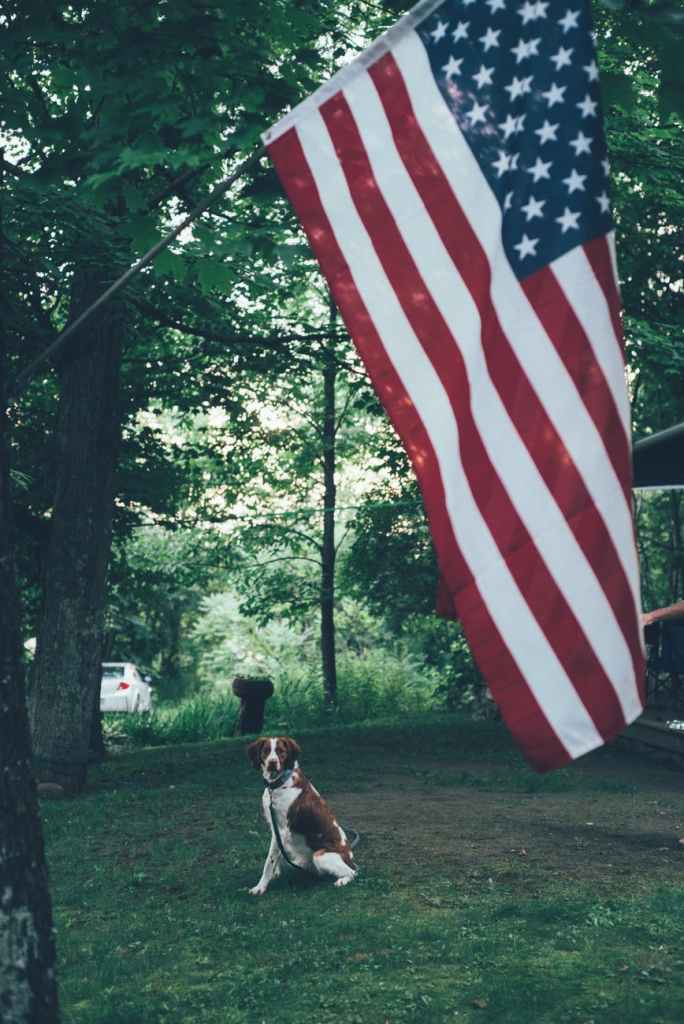 photo of united states of america flag