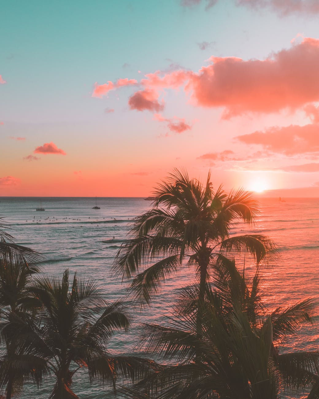 palm tree near body of water during sunset