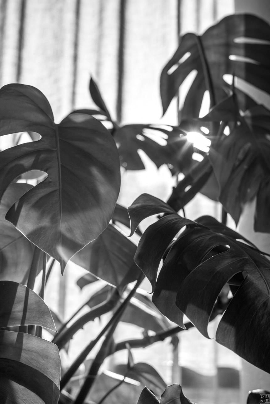 Leica M Monochrome , Summilux-M 1:1.4/50 asph