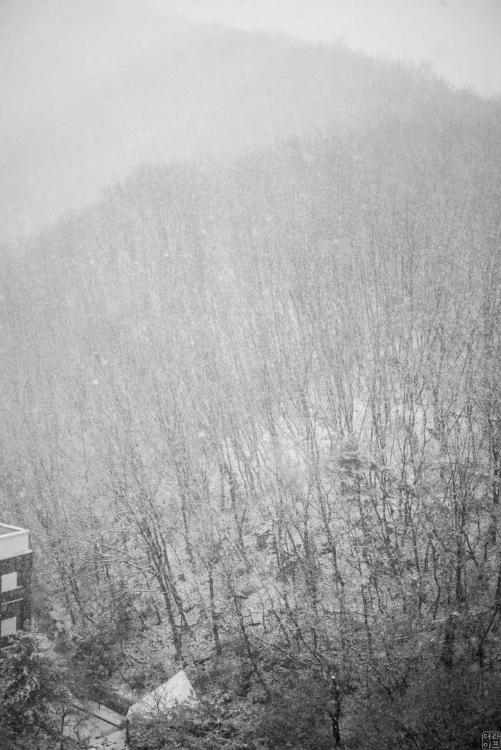 Leica M Monochrom(typ246), Summarit-M 1:2.5/75