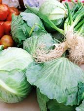 Lush cabbage.