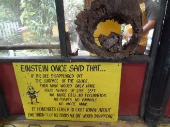 Bee Saying Einstein