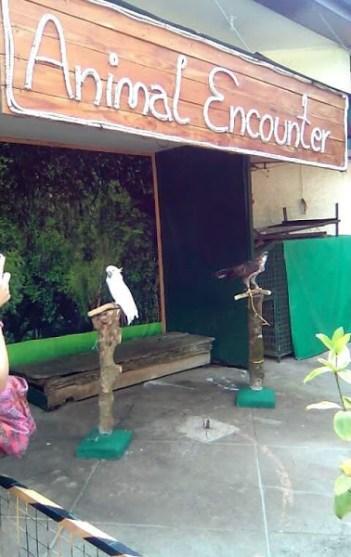 Birds at Residence Inn