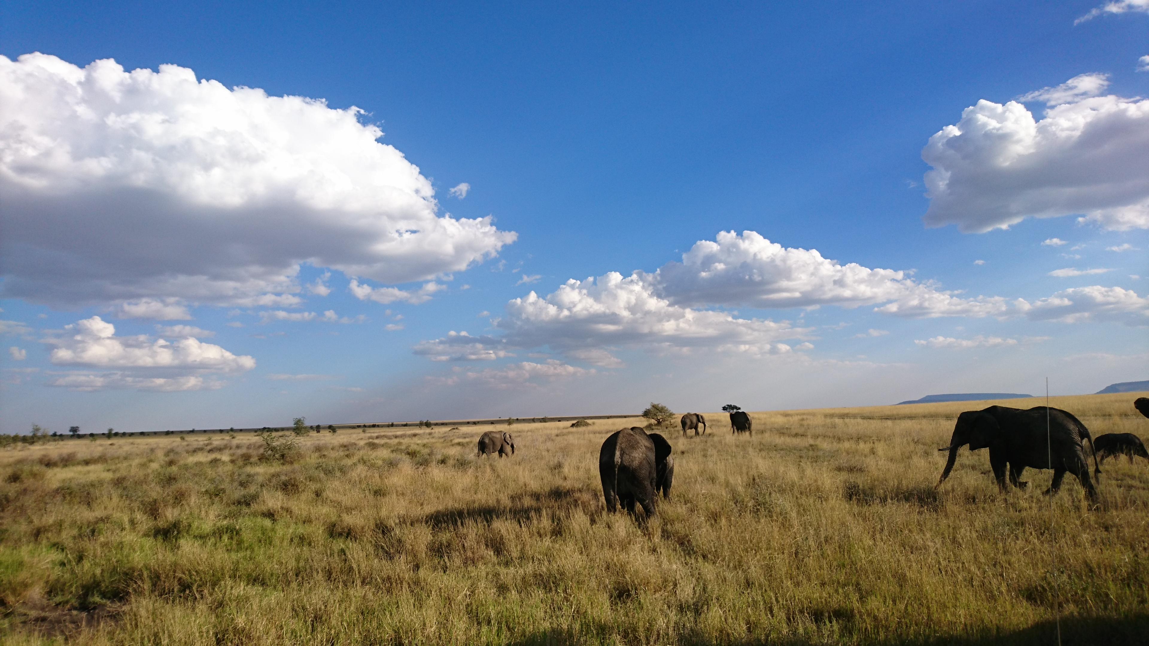 Elephants Serengeti National Park