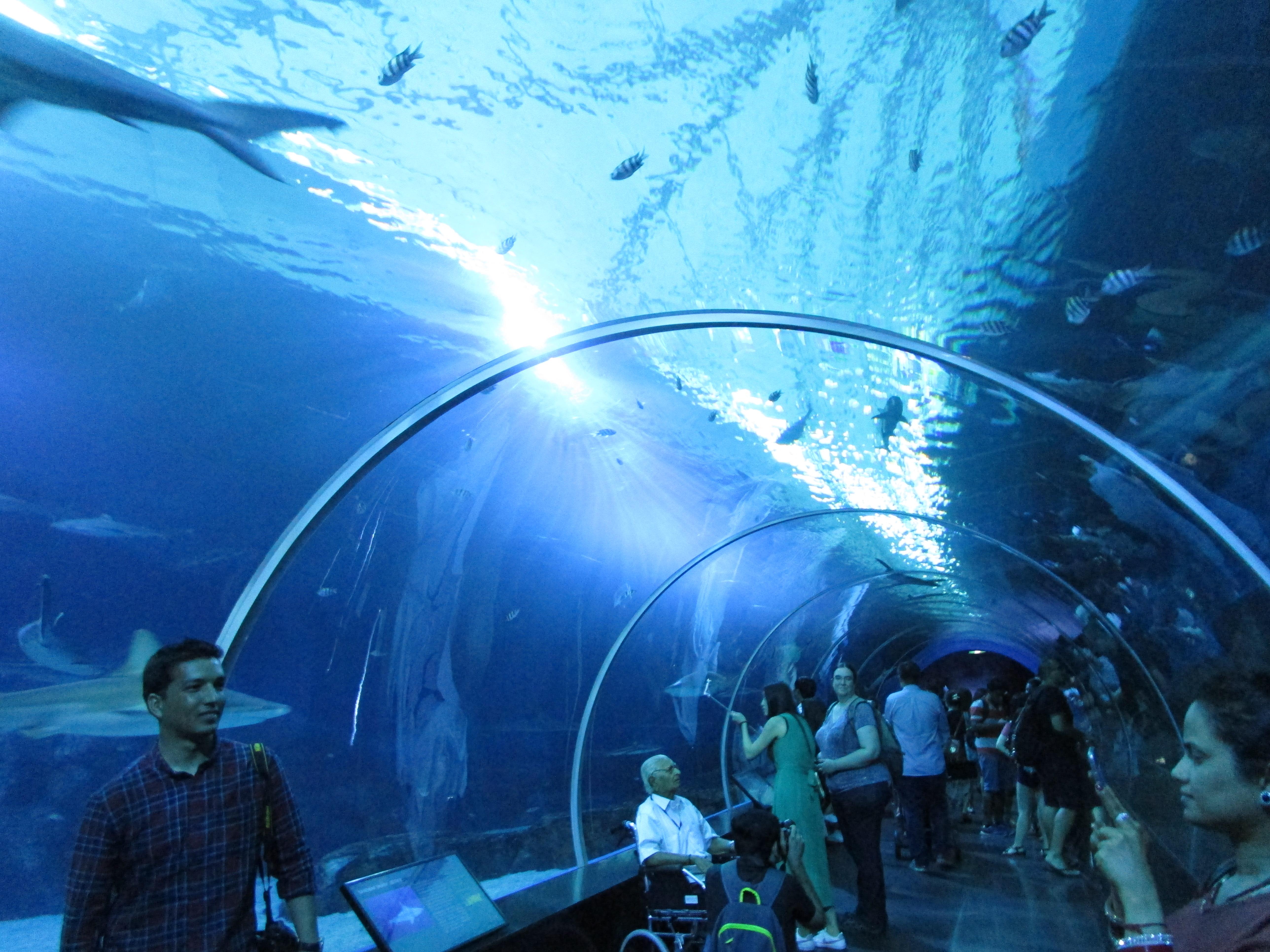 S.E.A Aquarium Sentosa