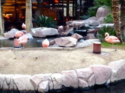 Flamingo Las Vegas has real flamingos!