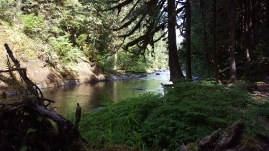 Old Salmon River Trail 2016-7-1 (76 of 158)