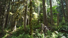 Old Salmon River Trail 2016-7-1 (77 of 158)