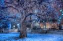 tree-lights1_large.jpg