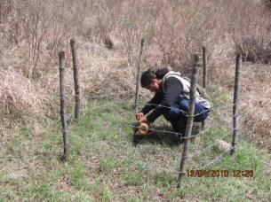 Setting honey trap to collect hair sample for gentical study