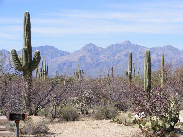 saguaro national park life