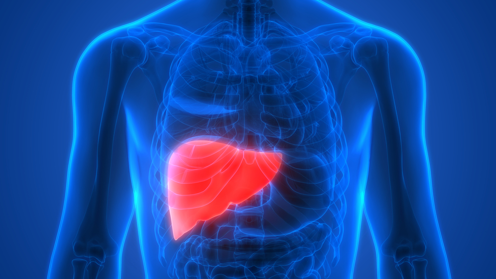 How Well Do You Know Your Liver The Life Pile