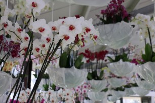 Inside the Orchid Greenhouse which also smelled amazing!