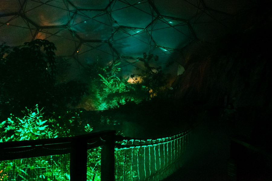 rope bridge at night Rainforest biome