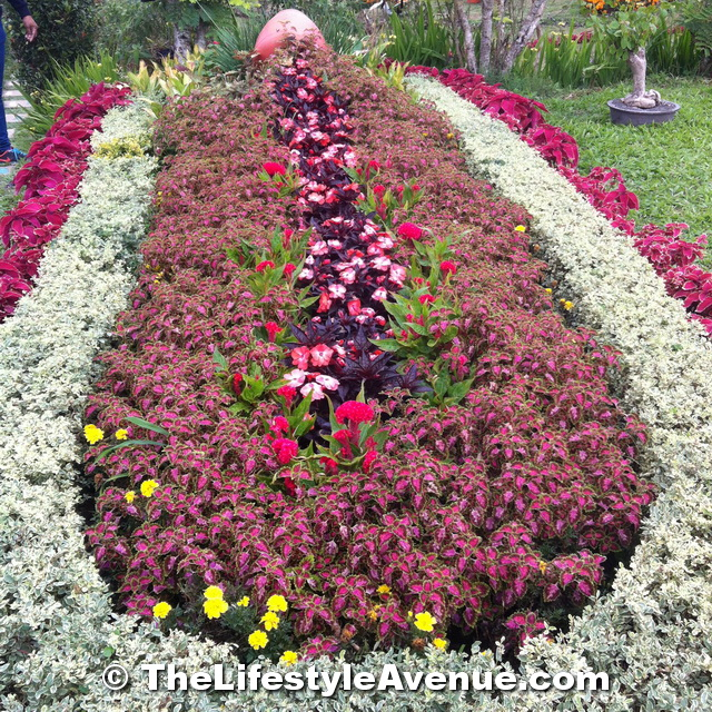 """PARADIZOO: POWER OF THREE """"Festive Bloom of Agriculture"""""""