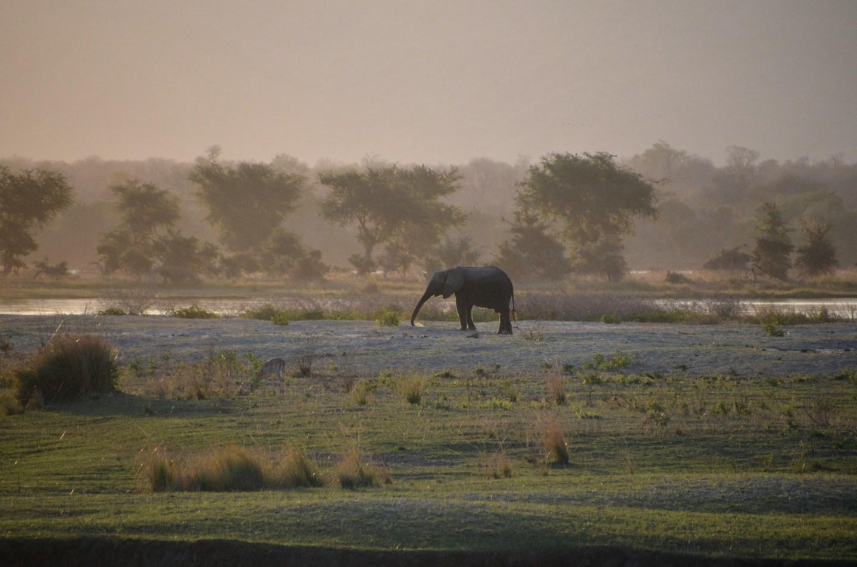 Zimbabue - Mana pools