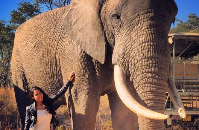 Africa - Zimbabwe - Imire Game Park - Elephant