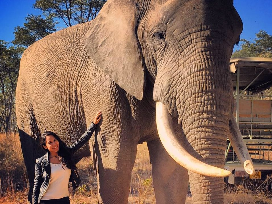 Imire Game Park - Afrika - Simbabwe - Elefant