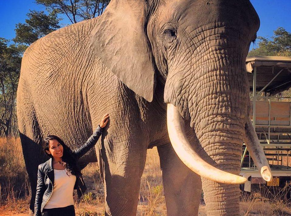 Africa - Zimbabue - Imire Game Park - Elefante