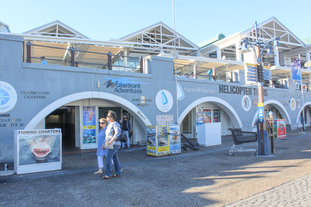 scuba diving - Waterfront - Cape Town - South Africa