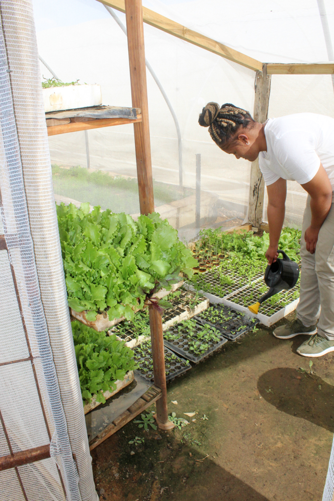 Aquaponics - Aquila Safari - Feast Africa - Cape Town - South Africa - Travel