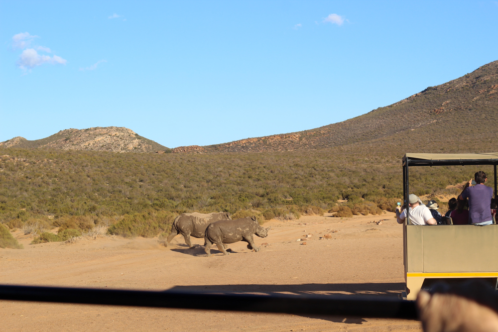 Aquila Safari - Feast Africa - Cape Town - South Africa - Travel