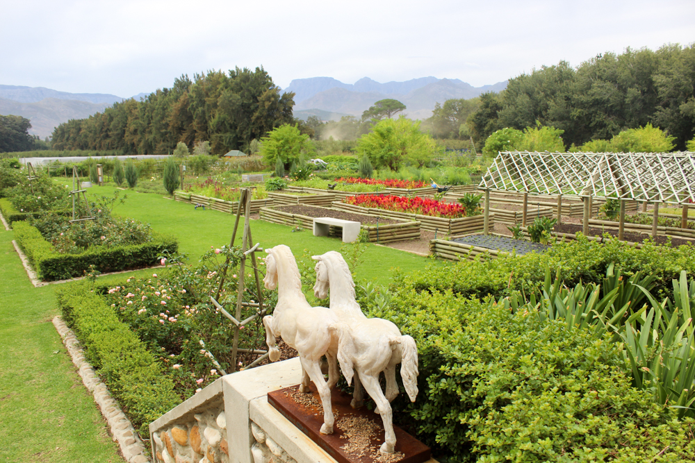 Boschendal Wine Estate - Wine Tour - Feast Africa - Franschhoek - Cape Town - South Africa - Travel