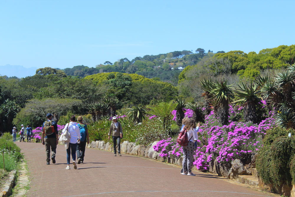 Kirstenbosch Botanical Garden - Cape Town - South Africa