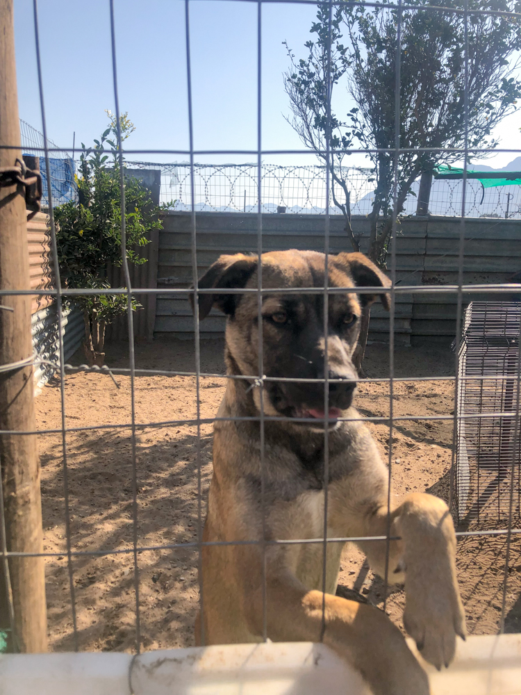 CHAIN Boland animal shelter - Tulbagh - South Africa