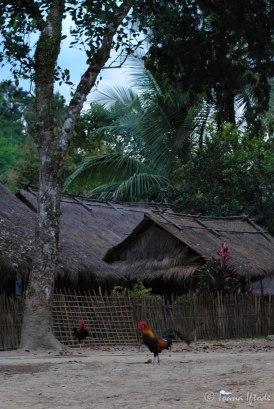 Laos-4185