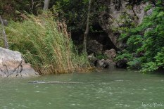 If you look closely, you can see a crocodile in the water (one of the 2 we saw that day)
