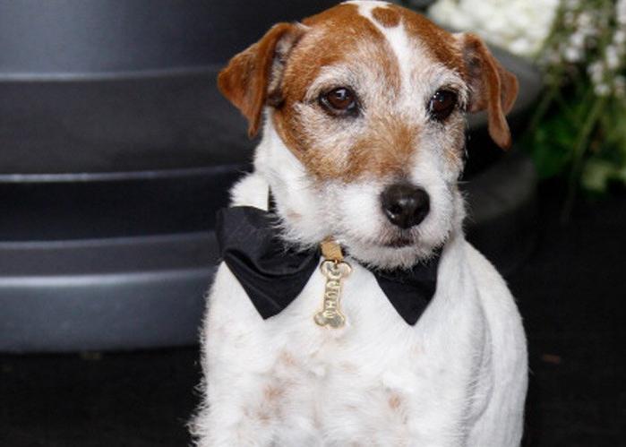 dogs academy awards