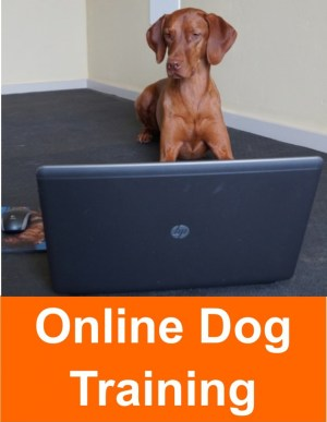online_dog_training_2