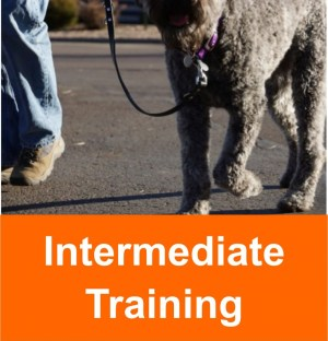intermediate_training_2