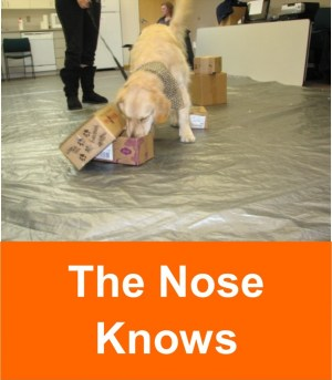 the_nose_knows_2