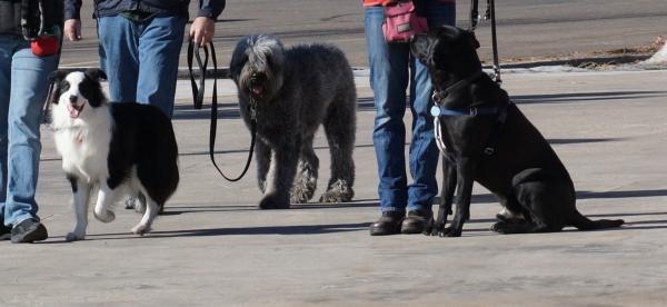 dog aggressive or reactive