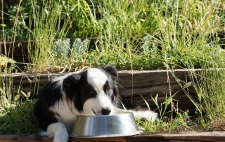 preserving commercial dried dog food