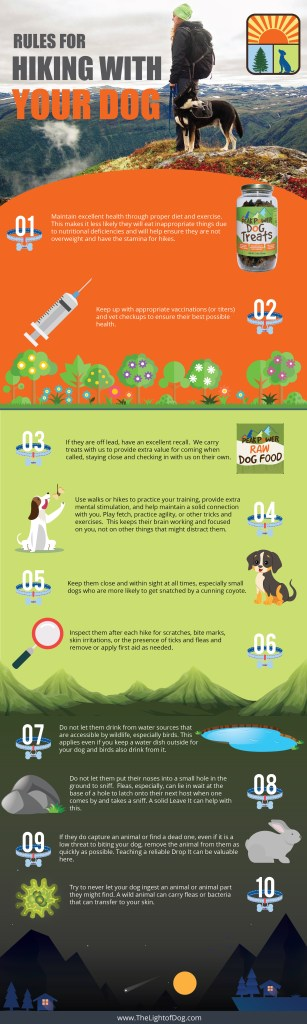 Rules for hiking with your dog