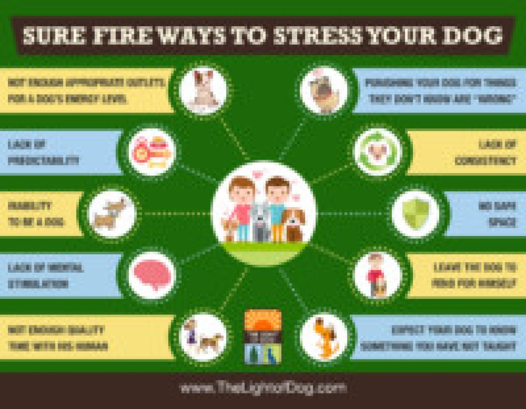 ways to stress your dog